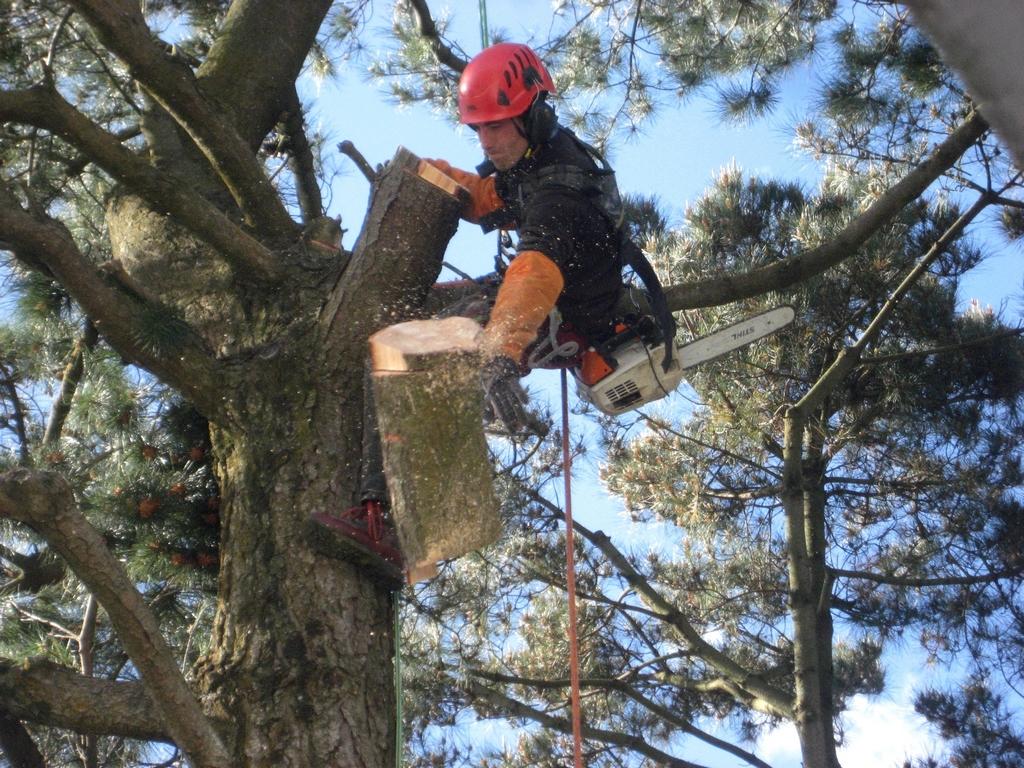 Eric jacob lagage d 39 arbres pr s de vannes baden eric for Prix de l elagage d un arbre