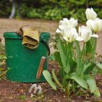 jardin au printemps : tulipes